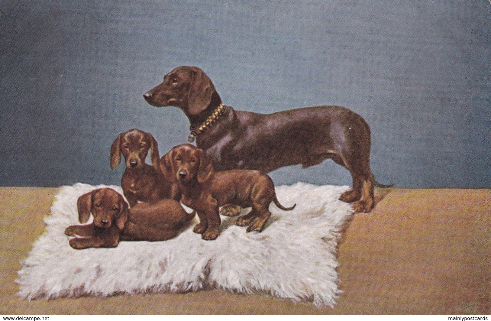 AS91 Animals - Dog - Dog With Puppies - Dogs