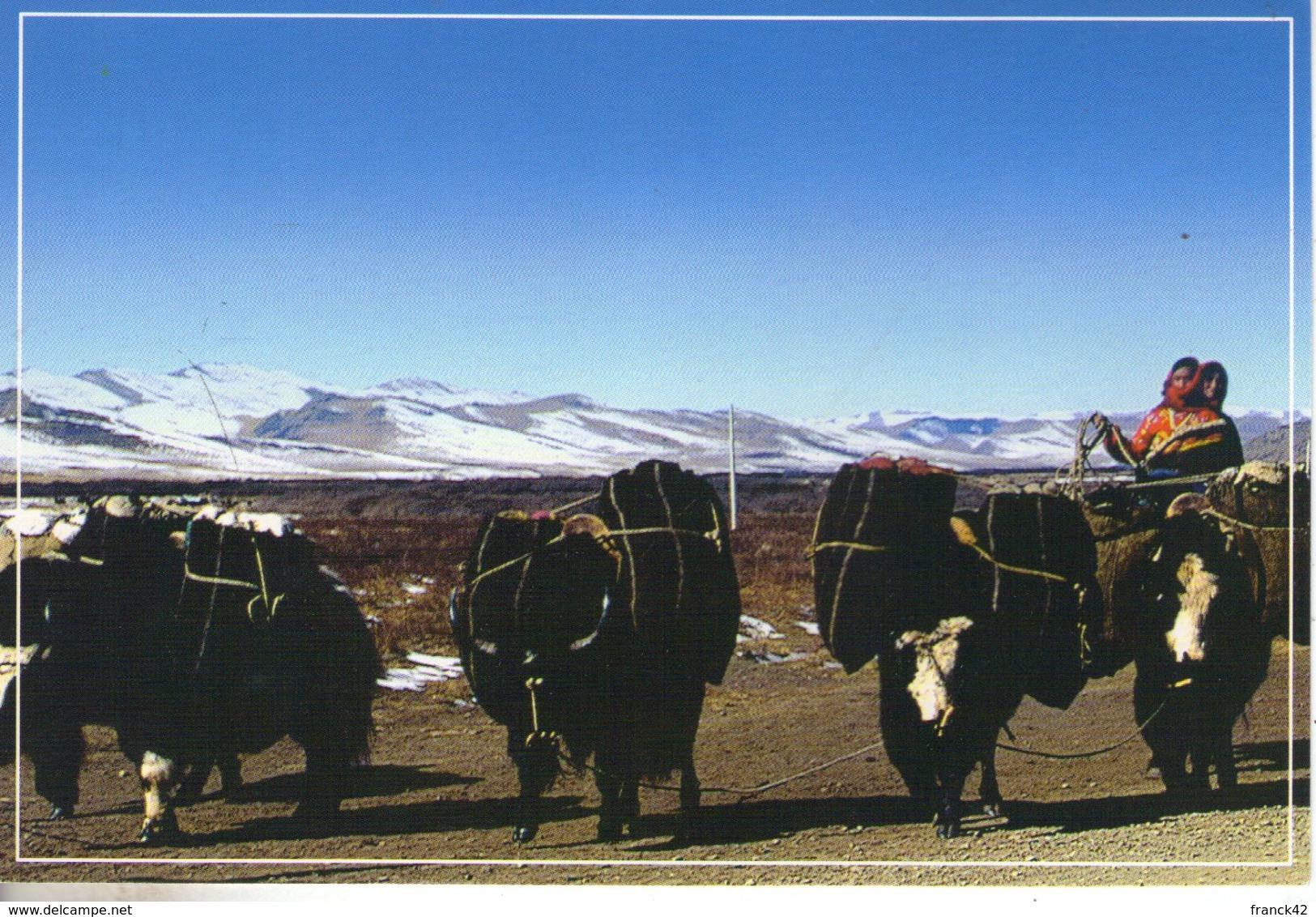 Tibet. Lot De 9 Cartes Modernes. - Tibet