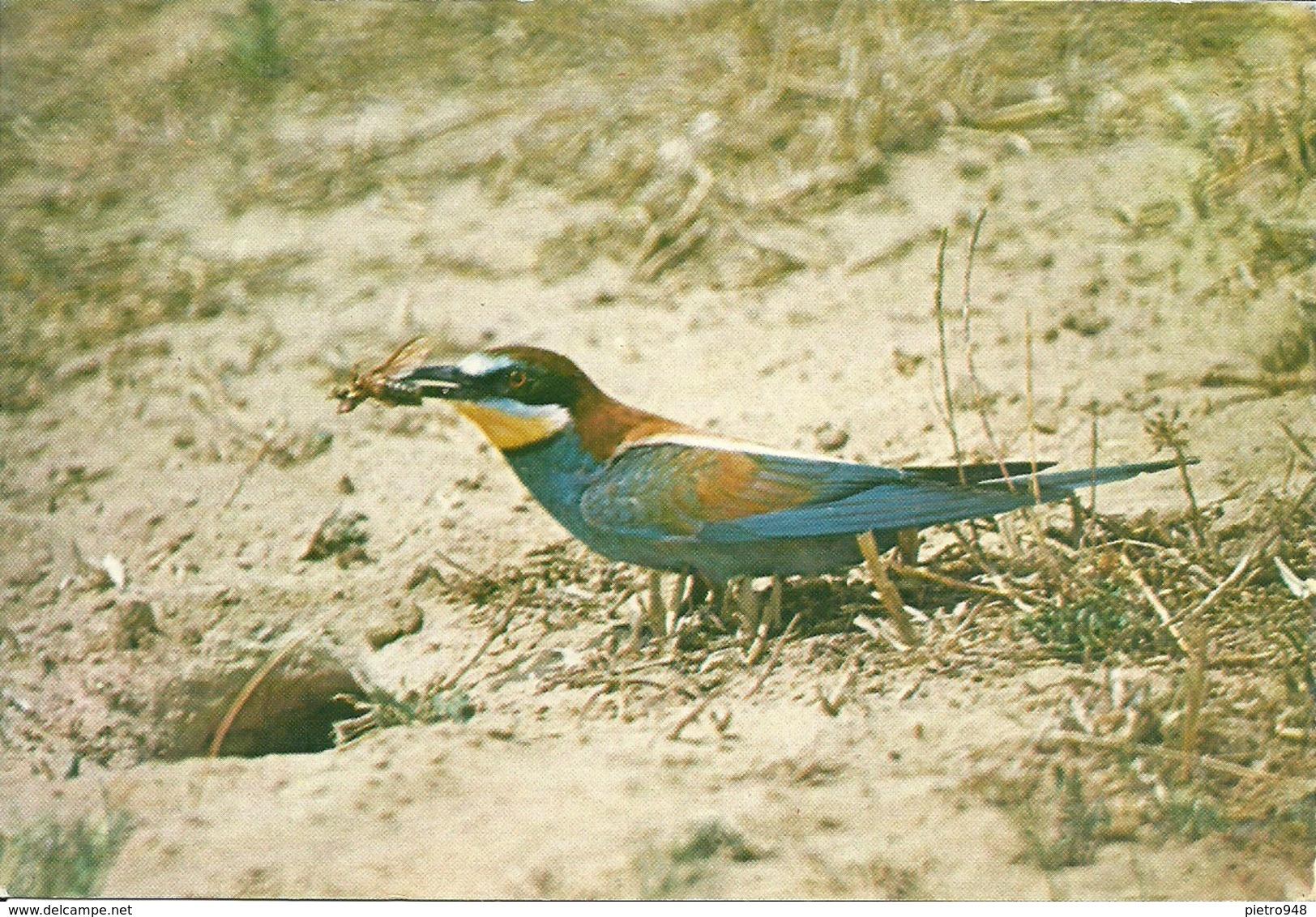 Rifugi Faunistici E Oasi Del W.W.F., Gruccione (Merops Apiaster) - Vögel