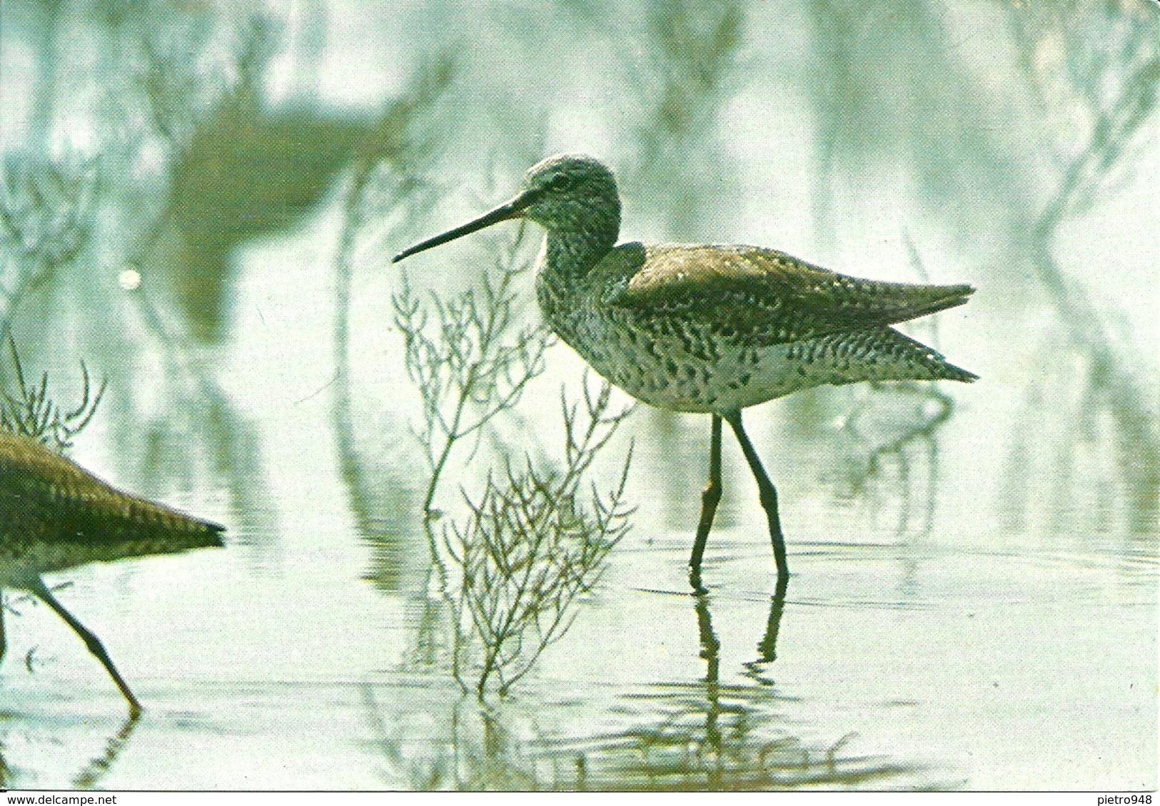 Rifugi Faunistici E Oasi Del W.W.F., Totano Moro (Tringa Erythropus) - Vögel