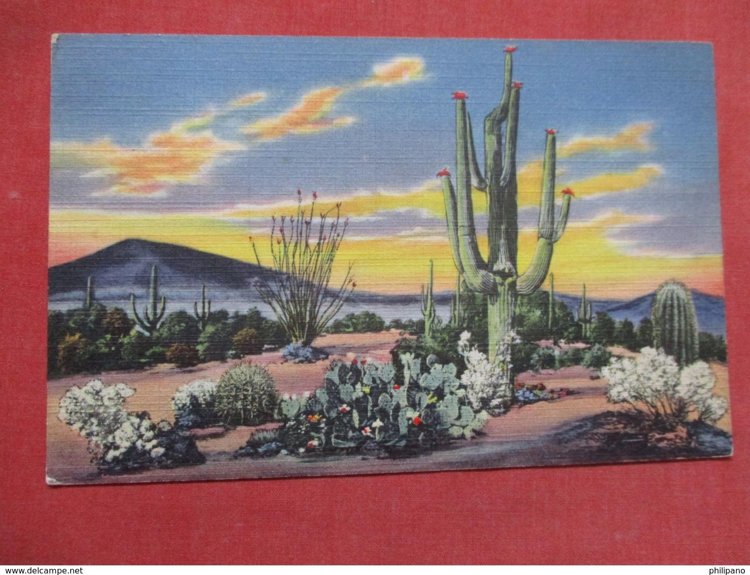 Sunset On The Desert    Ref   3598 - Cactusses