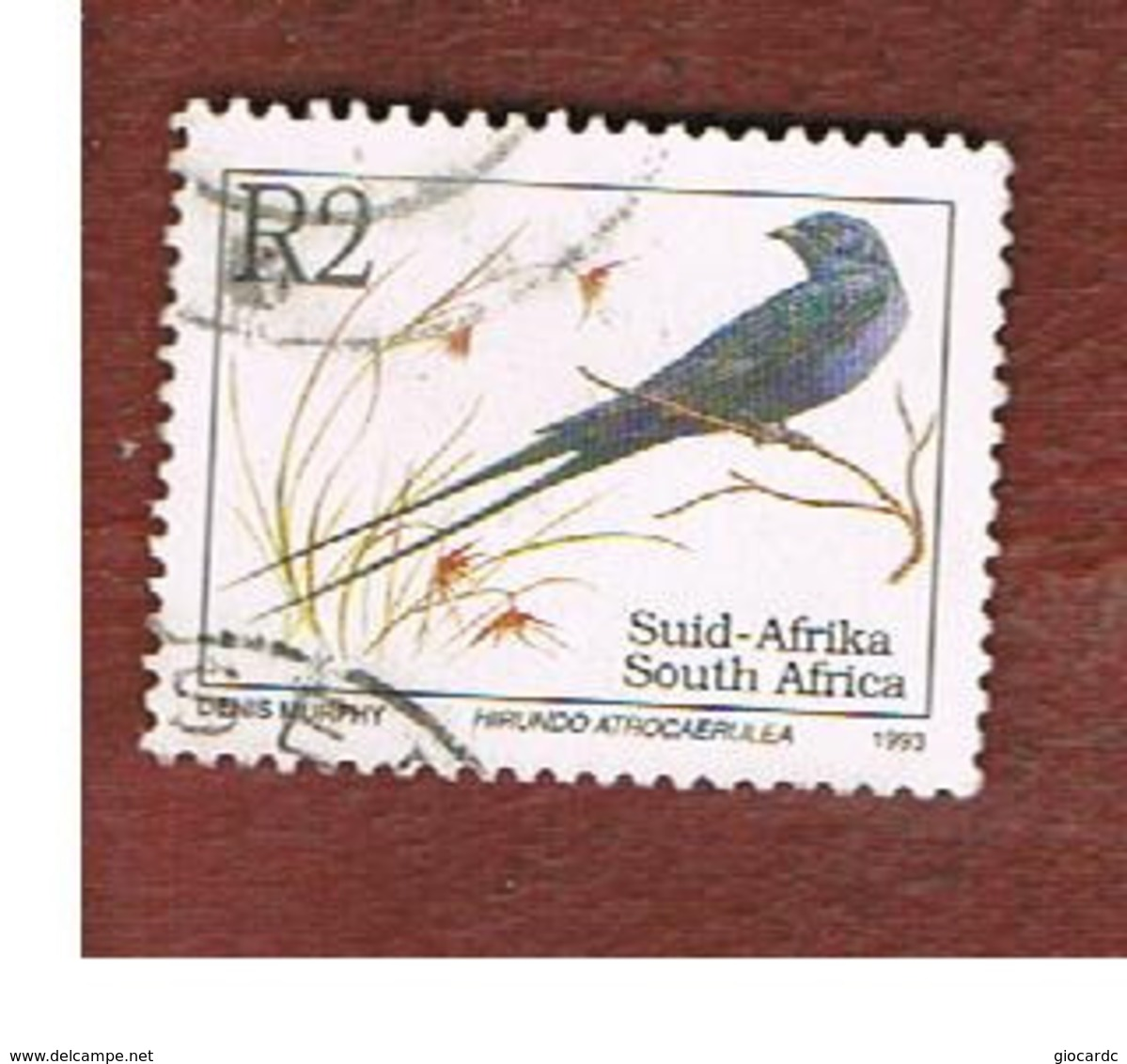 SUD AFRICA (SOUTH AFRICA) - SG 818 - 1993   ENDANGERED ANIMALS: BLUE SWALLOW (NAME IN LATIN LANGUAGE)  - USED - Sud Africa (1961-...)