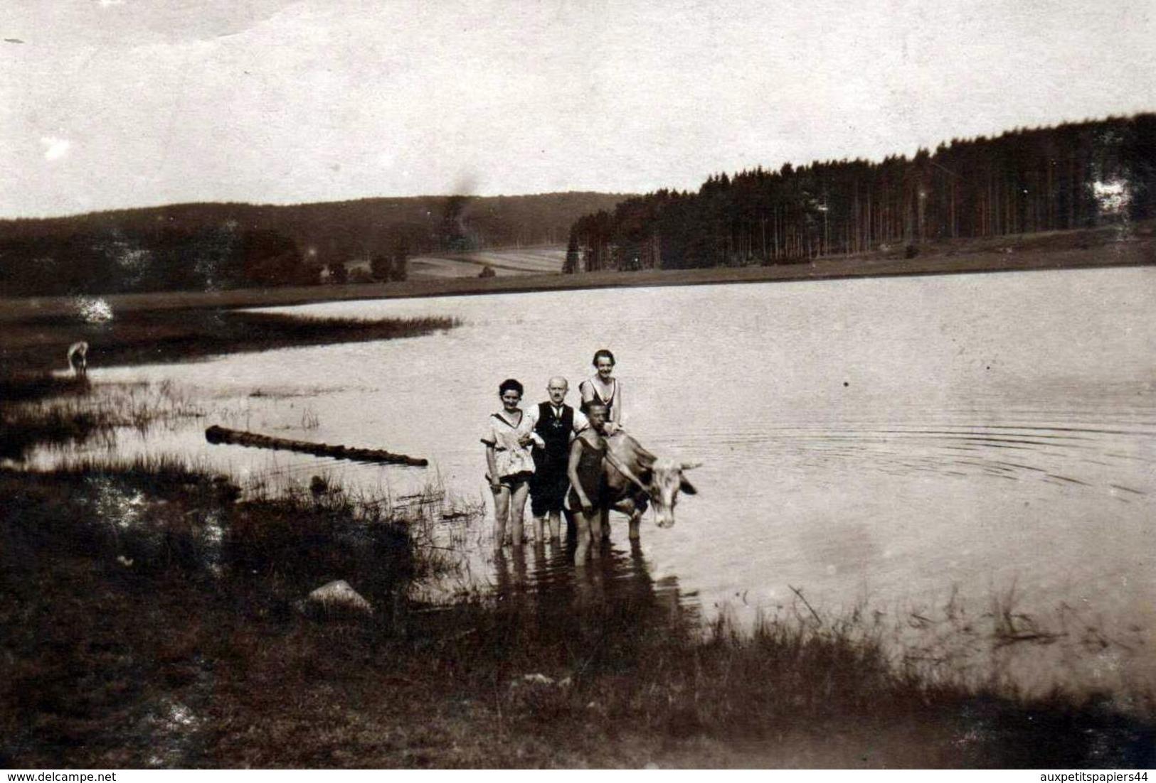 Amusante Carte Photo Originale D'un Bain Au Lac Pour Une Famille En Maillot De Bains Et Femme Sur Vache - Herbstein - Anonymous Persons
