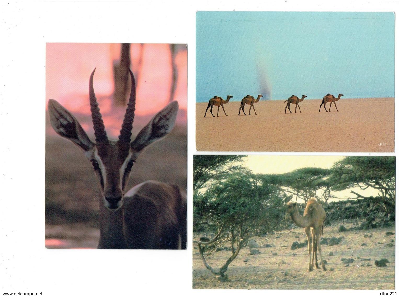 Lot 3 Cpm - Djibouti - Gazelle Chameau - Grand Bara 8813 Iris - Djibouti