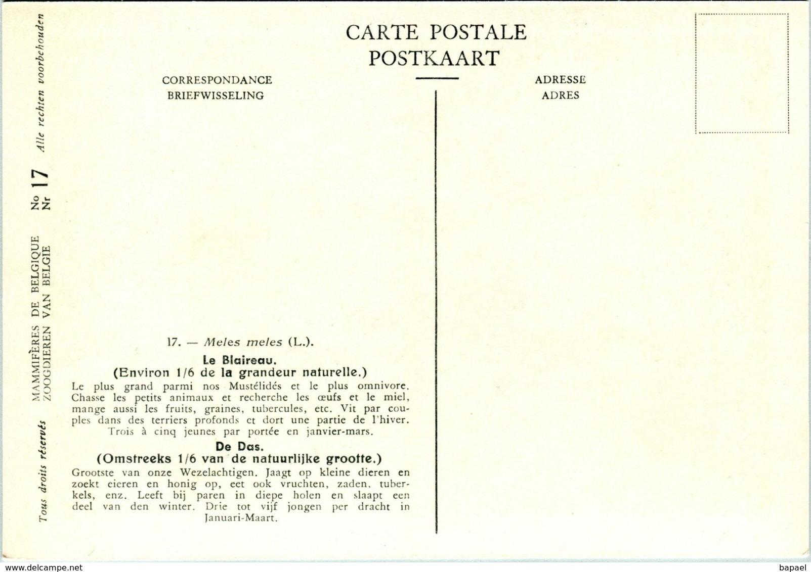 Le Blaireau - Belgique - Muséum Des Sciences Naturelles (Illustrateur L. Henderycky) (Recto-Verso) - Autres