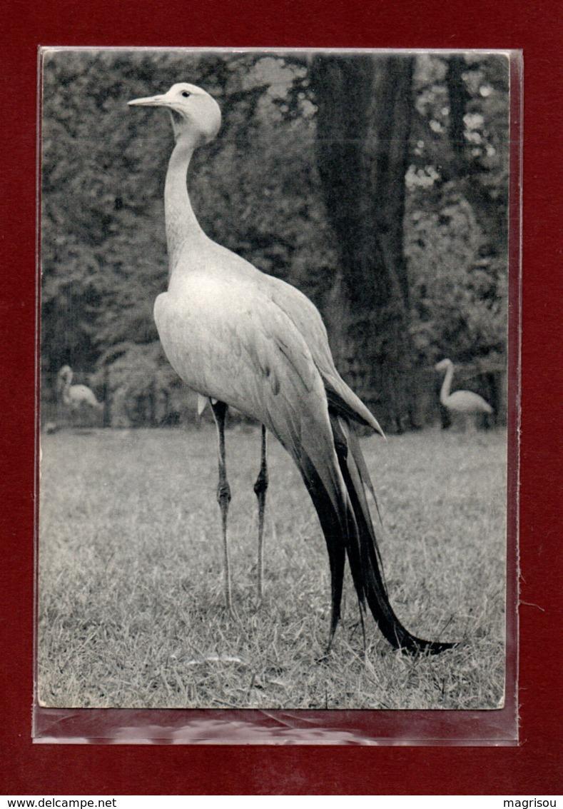 75-CPSM PARIS - PARC ZOOLOGIQUE - GRUE DE STANLEY - Uccelli