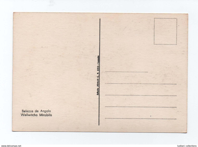 Postcard 1970s ANGOLA MOÇâMEDES WELWITSHA MIRABILIS Hermaphodite FLORA AFRICA - Angola