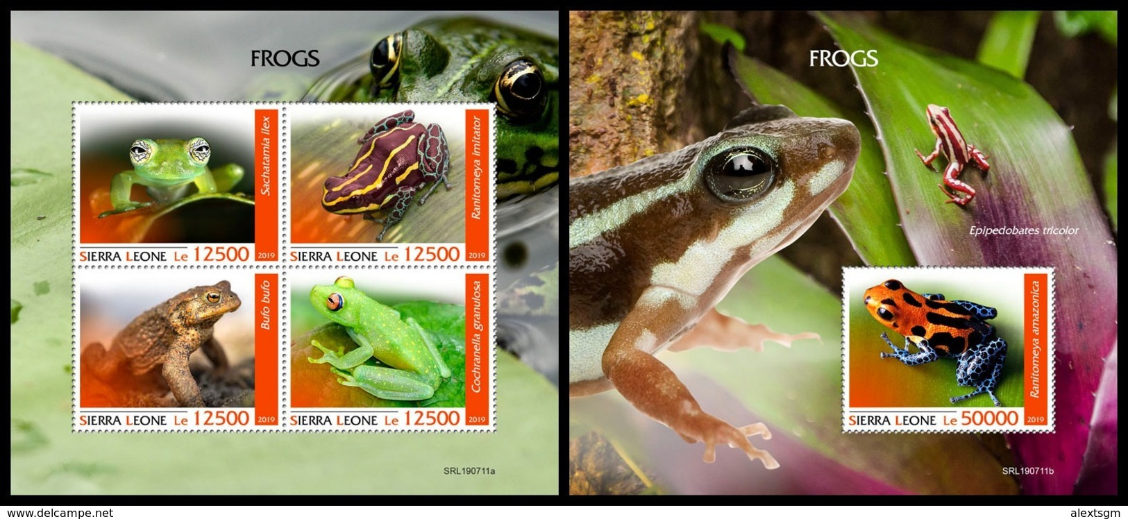 SIERRA LEONE 2019 - Frogs. M/S + S/S Official Issue [SL190711] - Sierra Leone (1961-...)