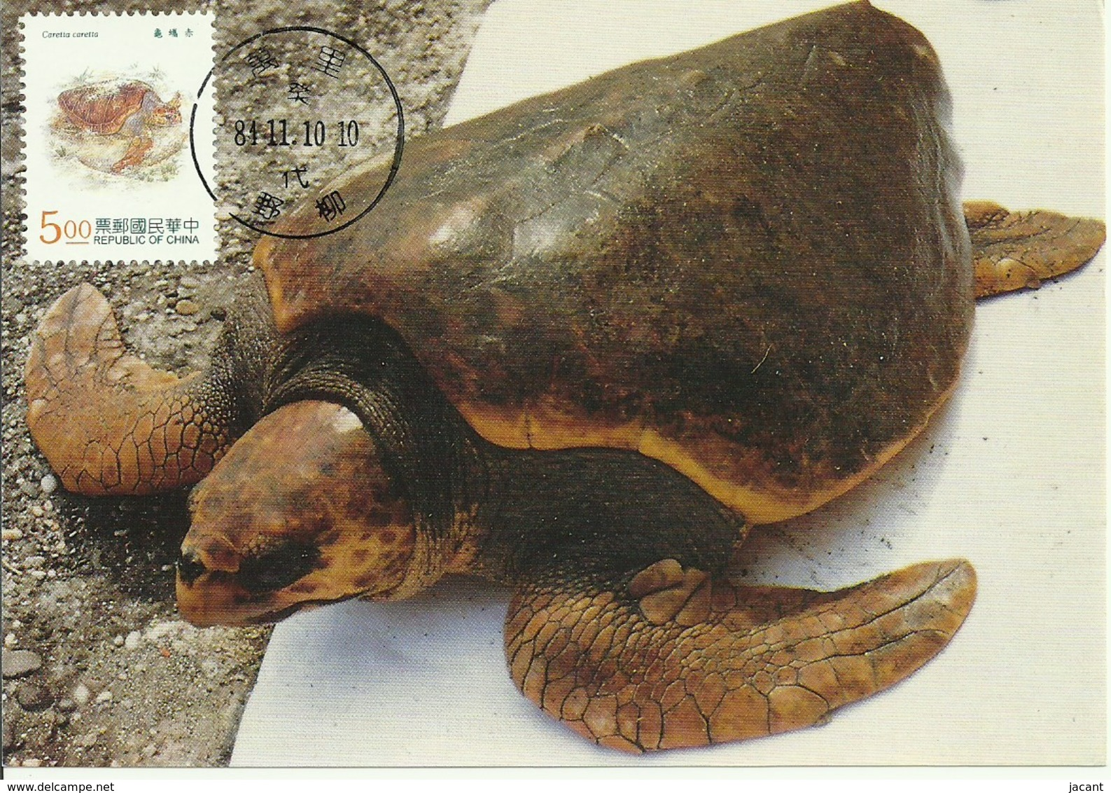 Carte Maximum - Taiwan - Tourtue - Loggerhead Sea Turtle - Caretta Caretta - 1945-... Repubblica Di Cina