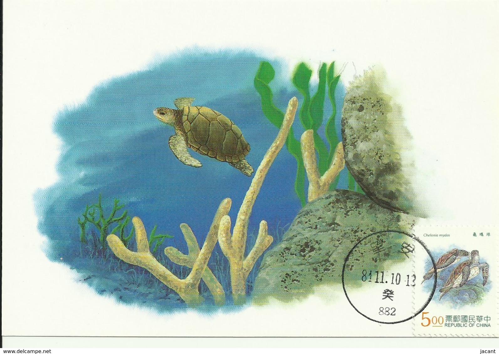 Carte Maximum - Taiwan - Tourtue - Green Turtle - Chelonia Mydas - 1945-... Repubblica Di Cina