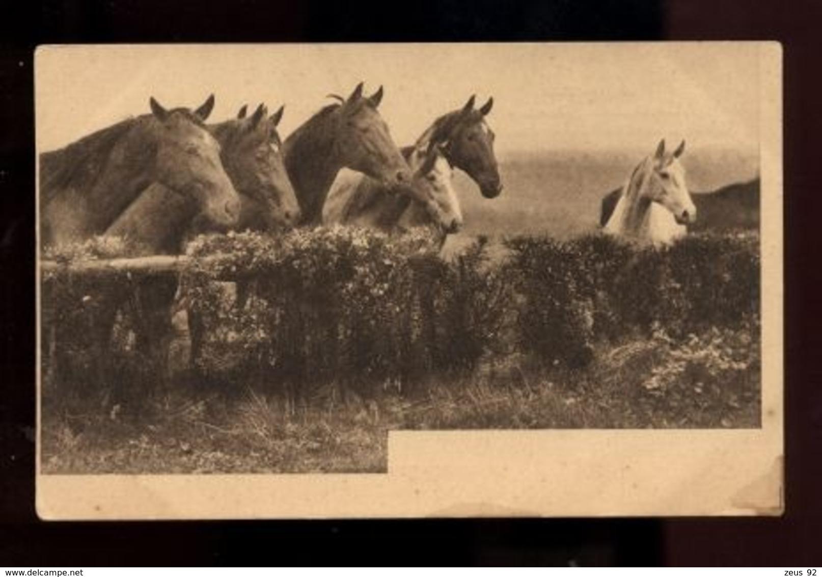 C2401 CAVALLI CHEVAUX HORSES CABALLOS CABALOS SMALL FORMAT FORMATO PICCOLO - Pferde