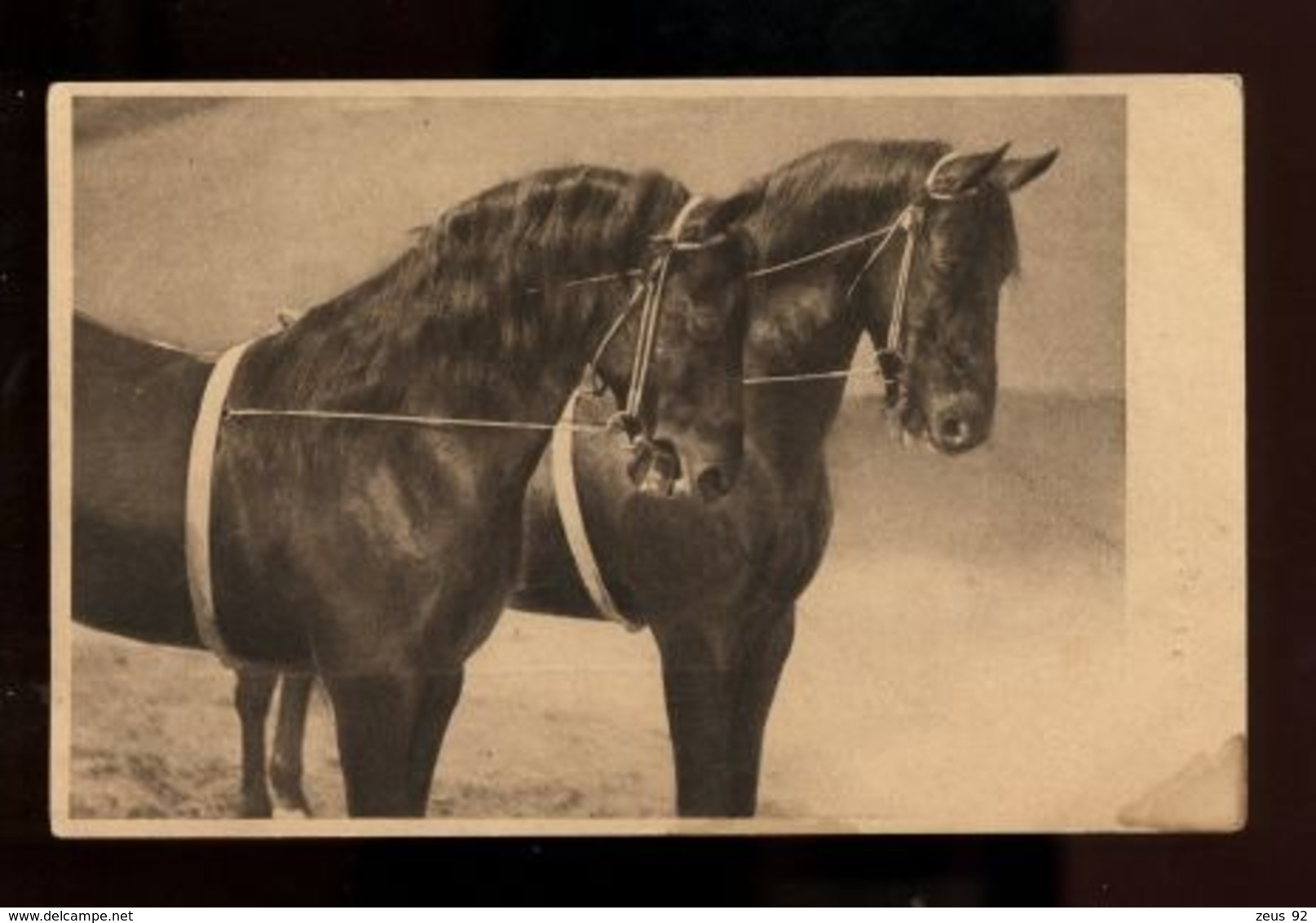 C2402 CAVALLI CHEVAUX HORSES CABALLOS CABALOS SMALL FORMAT FORMATO PICCOLO - Cavalli