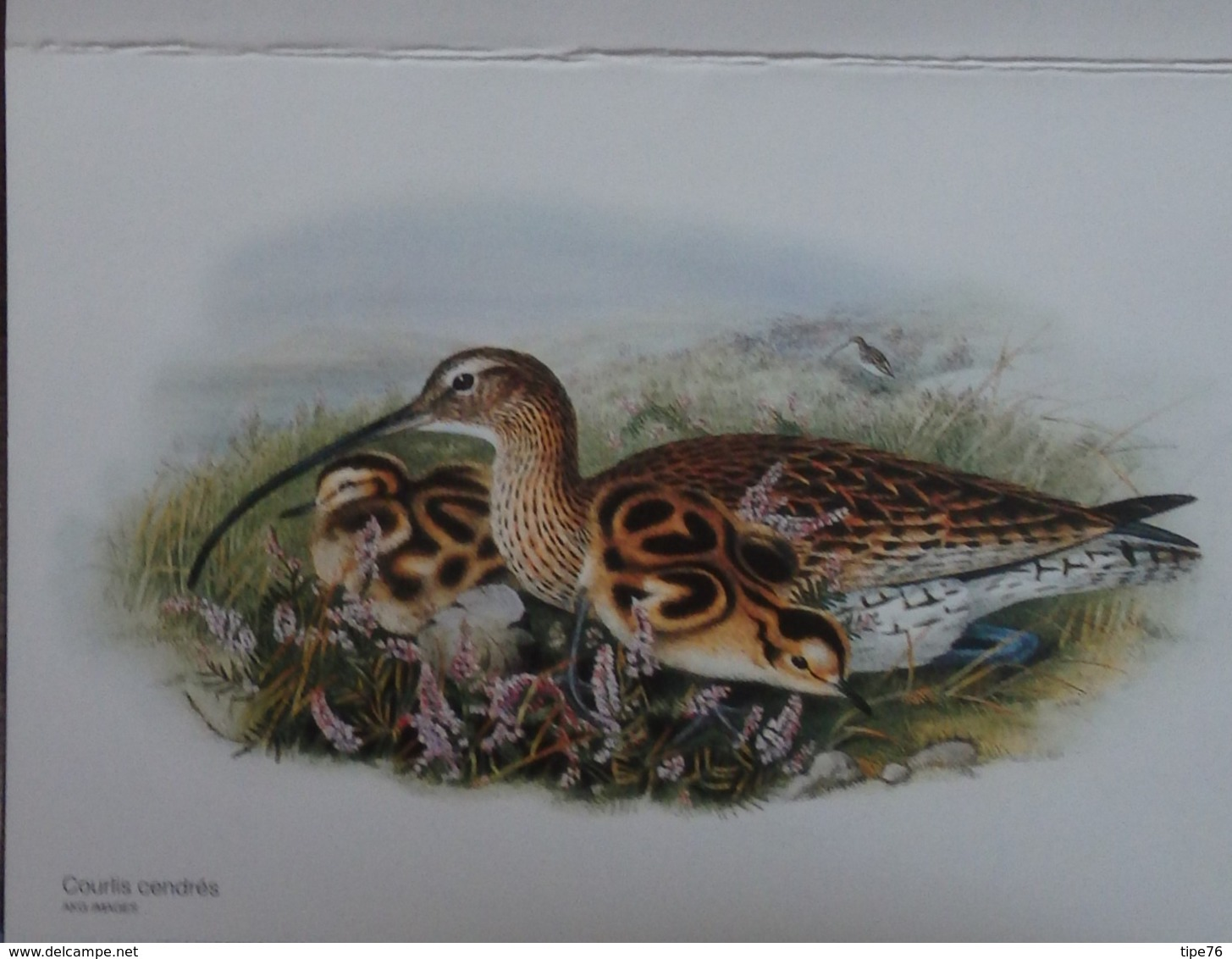 Petit Calendrier De Poche 2006 Illustration Oiseau Courlis Cendrés - Calendars