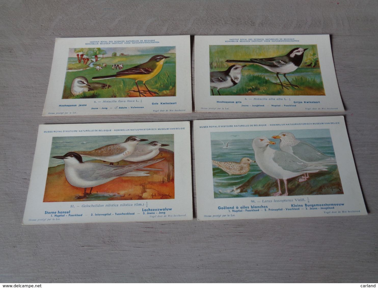 Beau Lot De 20 Cartes Postales Oiseaux  Oiseau  Illustrateur H.Dupond     Mooi Lot Van 20 Postkaarten Van Vogels  Vogel - Cartes Postales