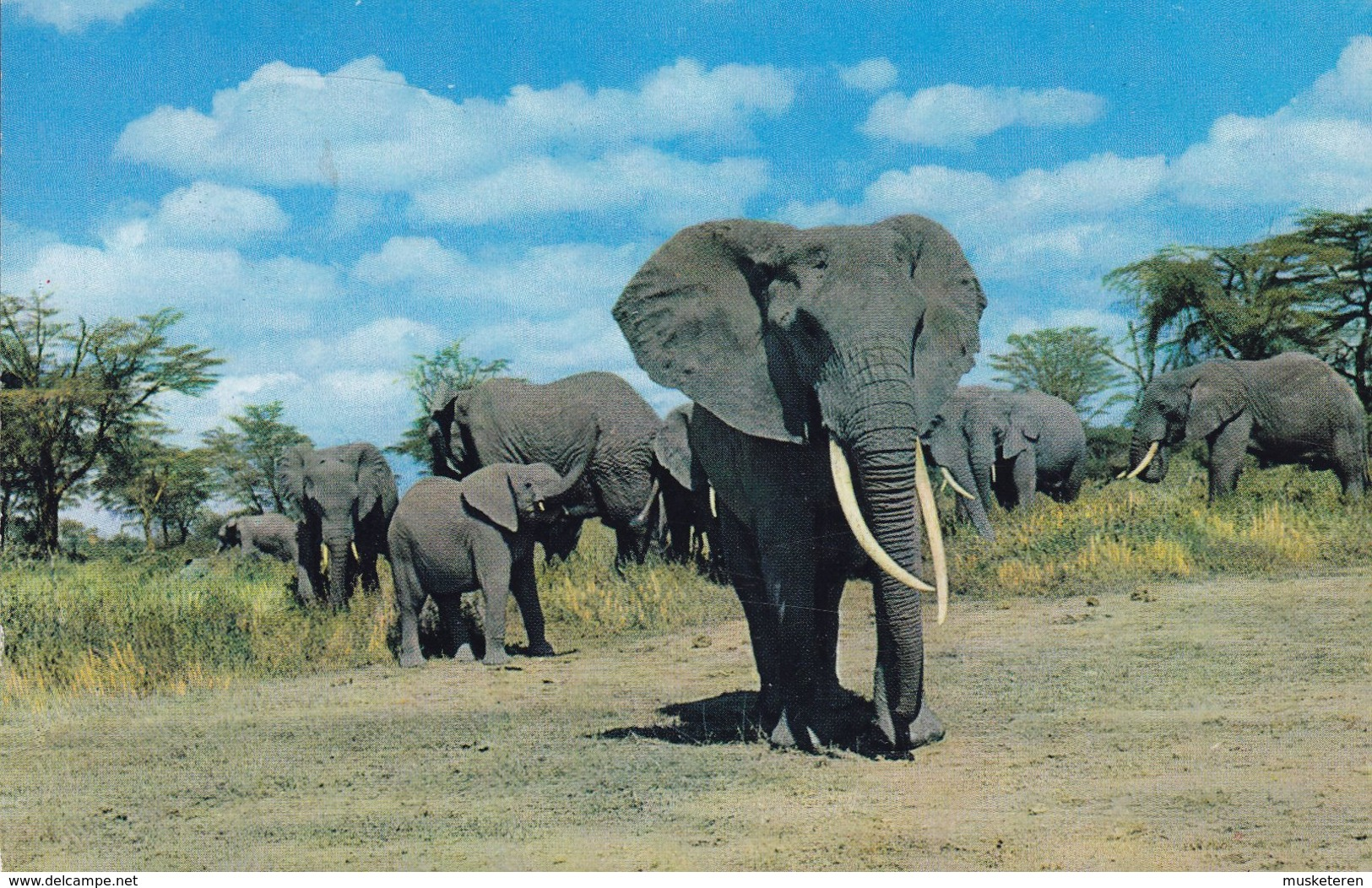Tanzania PPC BY AIR MAIL PAR AVION Label African Wild Life Elephants Elefanten ARUSHA 1967 RICKENBACH Switzerland Zebra - Tansania