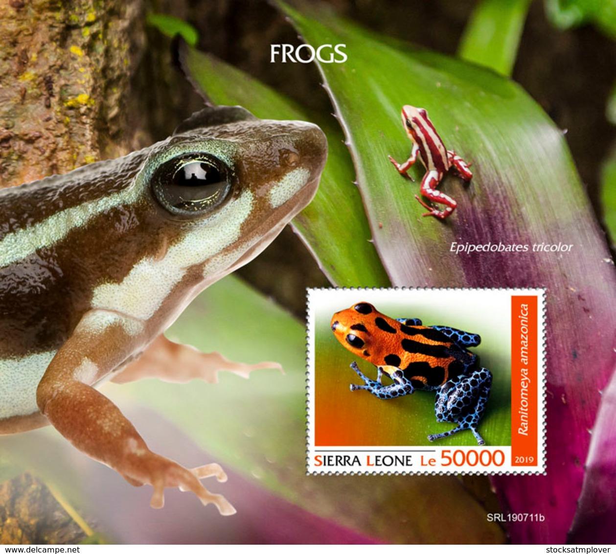 Sierra Leone  2019  Fauna  Frogs S201909 - Sierra Leone (1961-...)