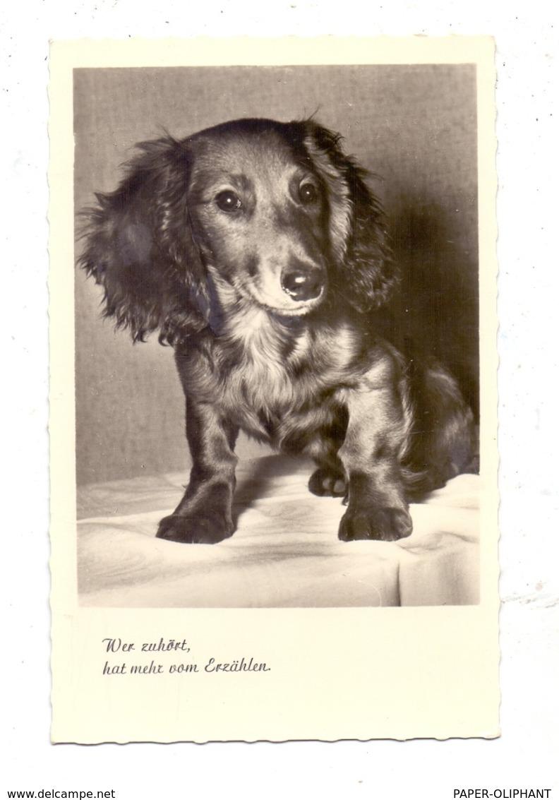 HUNDE - DACKEL / Teckel / Dachshund / Bassotto, Langhaardackel - Hunde