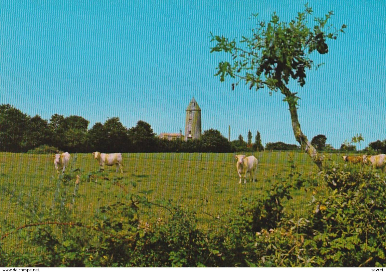 LEs LUCS-SUR-BOULOGNE. - Vaches Près Du Moulin - Les Lucs Sur Boulogne