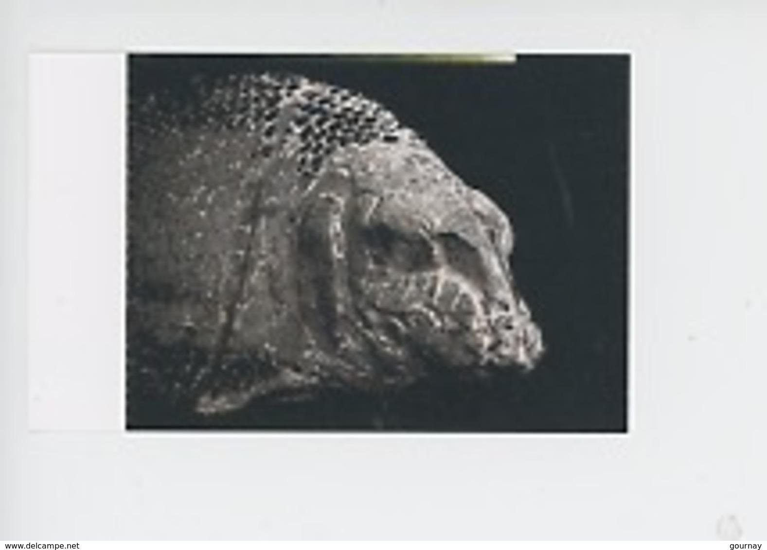 Ticket - Lepidotes Iennieri, Poisson Fossile, Cap De La Hève, 155 Millions D'années  (muséum Le Havre) - Toegangskaarten