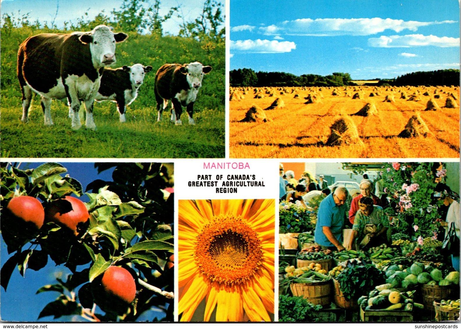 Canada Manitoba MacGregor Agricultural Scenes - Manitoba