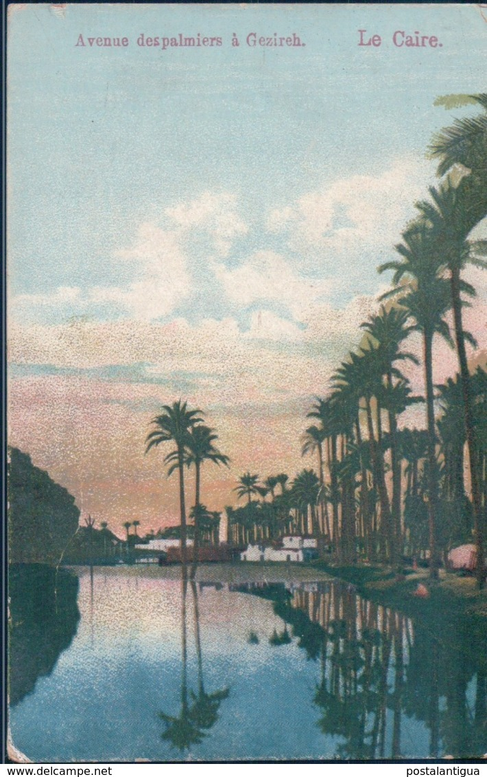 POSTAL EL CAIRO - LE CAIRE - AVENUE DESPALMIERS A GEZIREH - EGYPTO - El Cairo