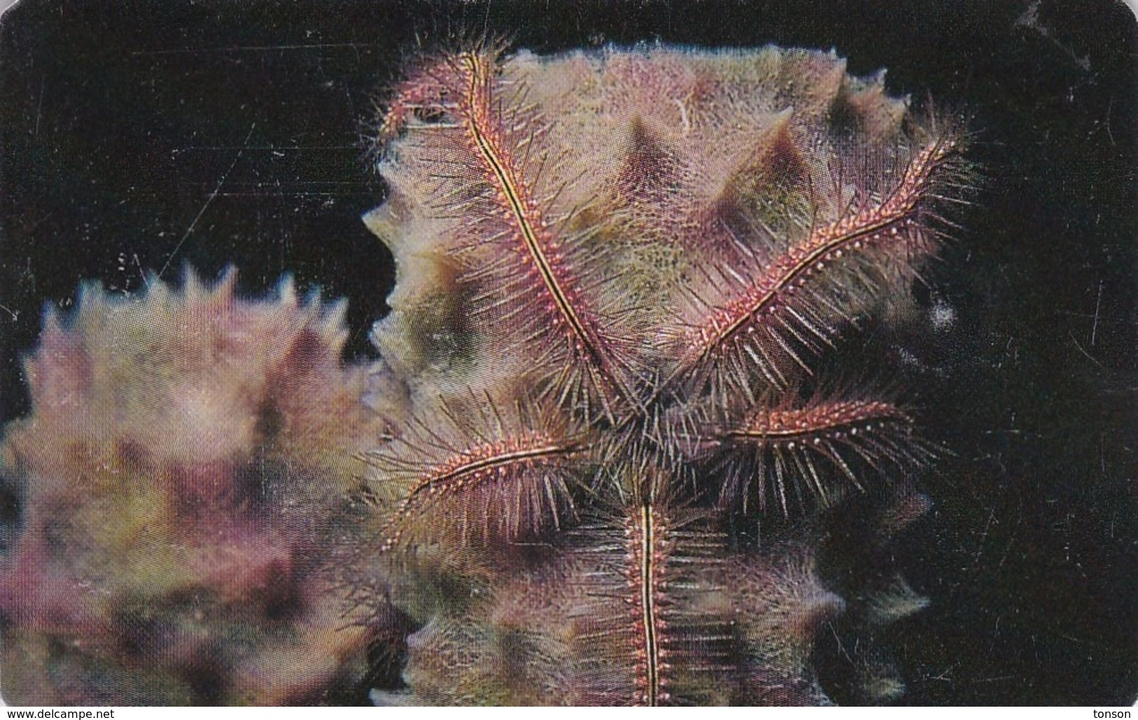 Venezuela, CAN2-0191b, Marine Fauna, Estrella Araña De Mar (4/10), 2 Scans.  GEM1A (Symmetric Black) - Venezuela