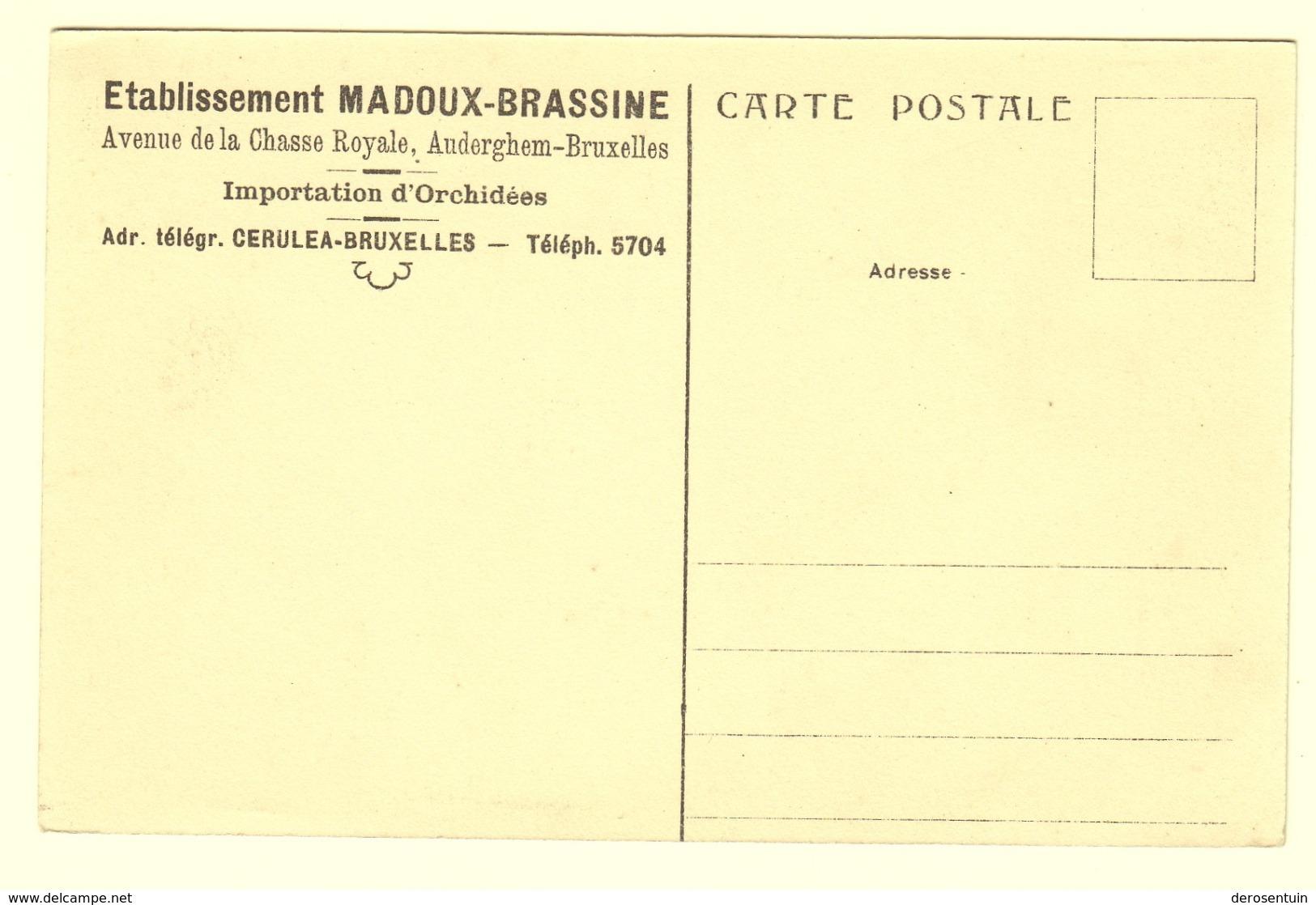 """A0853[Postkaart] Etablissement Madoux-Brassine ... Auderghem-Bruxelles / Serre De """"Vandas Coeruleas"""" [Oudergem Cerulea] - Auderghem - Oudergem"""
