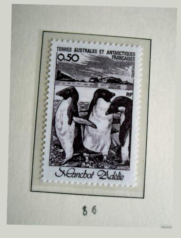 TAAF Stаmp Penguin 1981 Birds - Pinguine