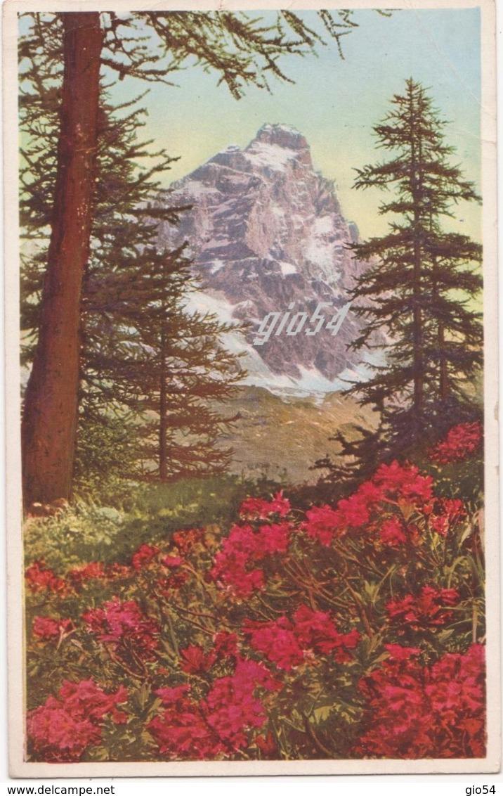 Aosta Valtournenche Monte Cervino Rododendri Bollo Staccato - Italy