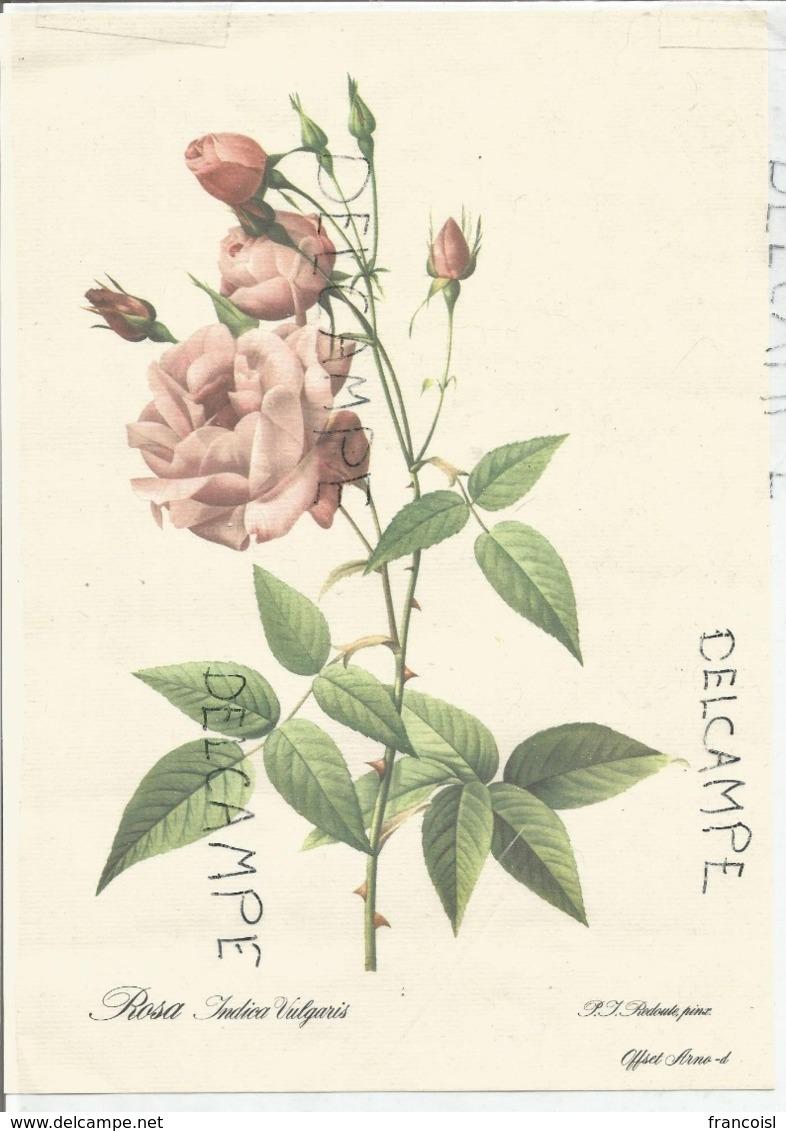 Dessin De Rosa Indica Vulgaris Par P.J. Redoute - Vieux Papiers