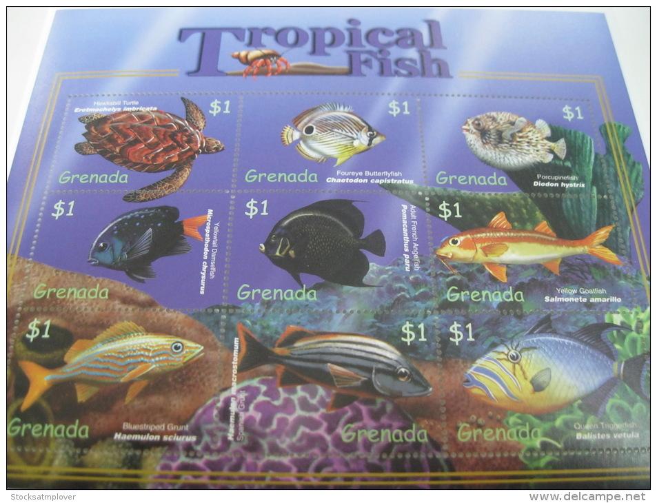 Grenada-Fish-Marine Life - Fische