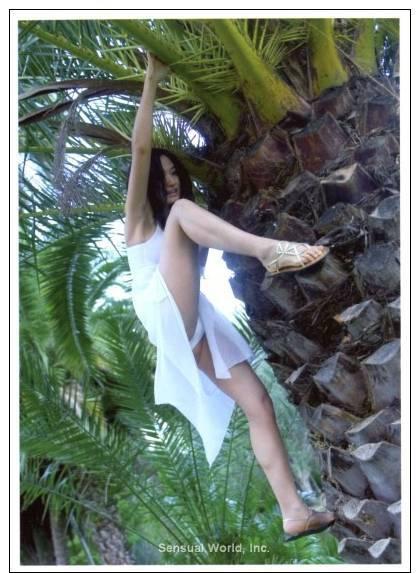 Sexy Long Legs Woman Asian Girl UPSKIRT POSTCARD Panties Crotch Climbing Palm Tree - 05181 - Pin-Ups