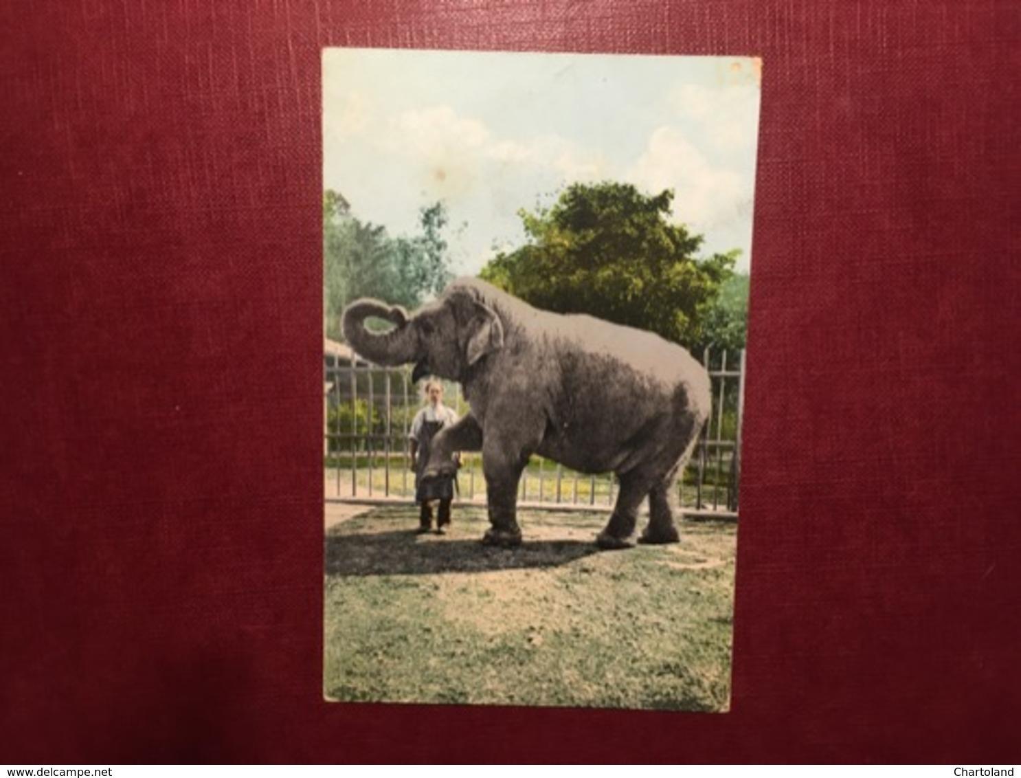 Cartolina Basel - Zoolog Garten - Elephant - 1908 - Cartoline