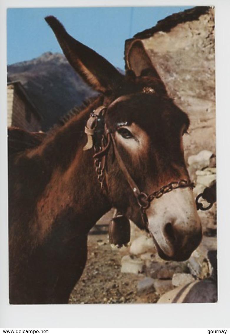 L'Ane (Corse Inoubliable) Cp Vierge N°94/88 - Ezels