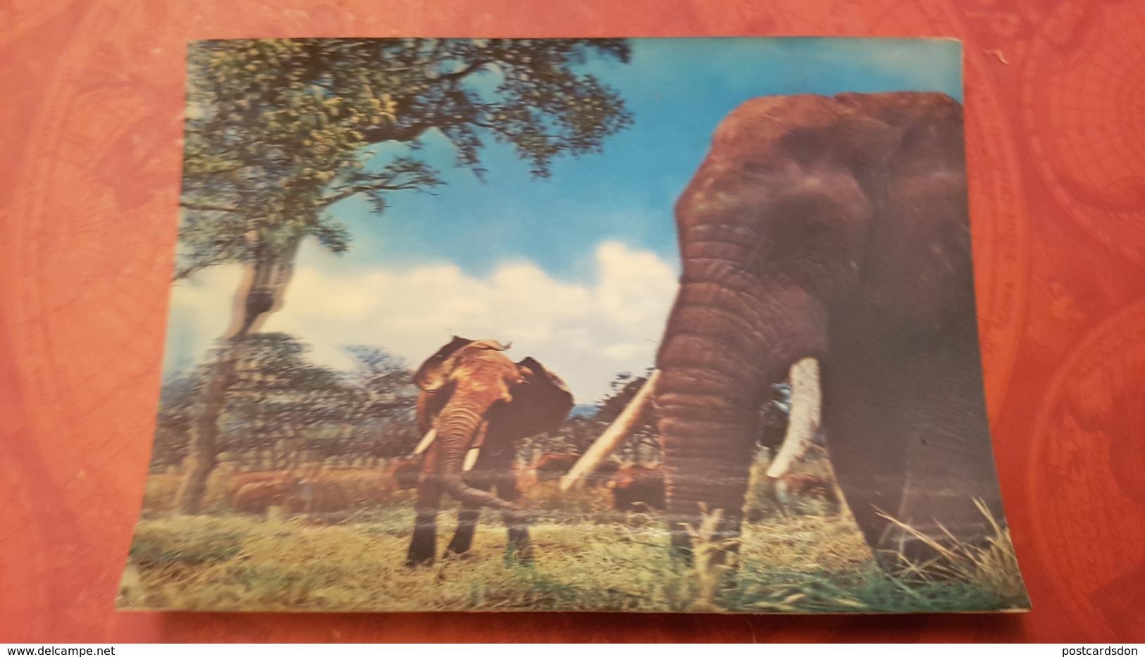 OLD  Postcard 3D Stereo PC 1980s Elephant - Elefanti