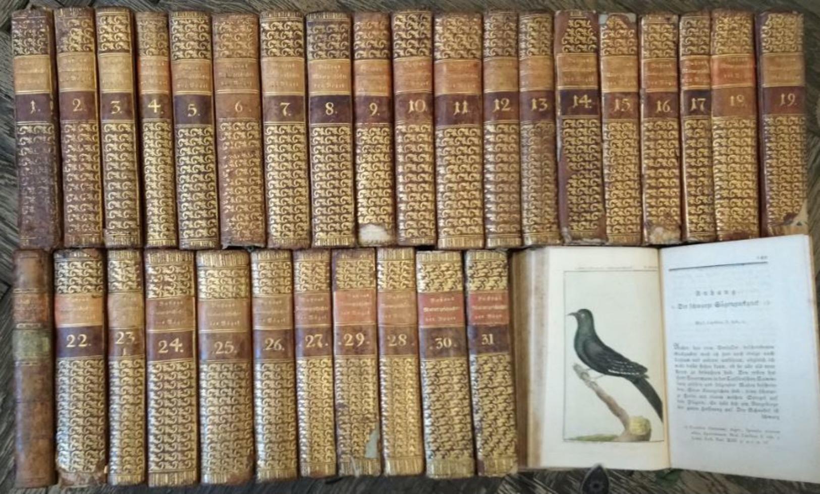 Herrn Von Buffons Naturgeschichte Der Vögel - 31 Bände. - Alte Bücher