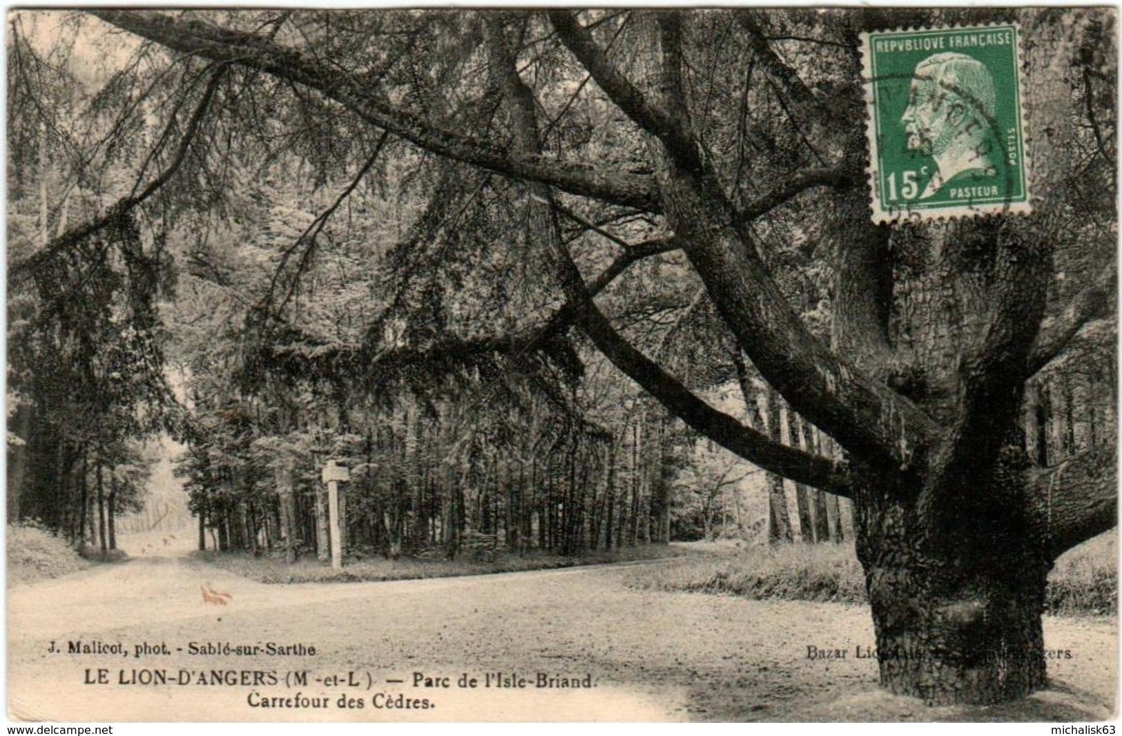 5KB 13. LE LION D'ANGERS - PARC DE L'ISLE BRIAND - CARREFOUR DES CEDRES - Angers