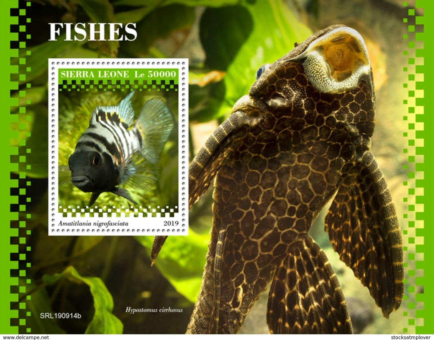 Sierra Leone 2019 Fauna Fishes  S201911 - Sierra Leone (1961-...)