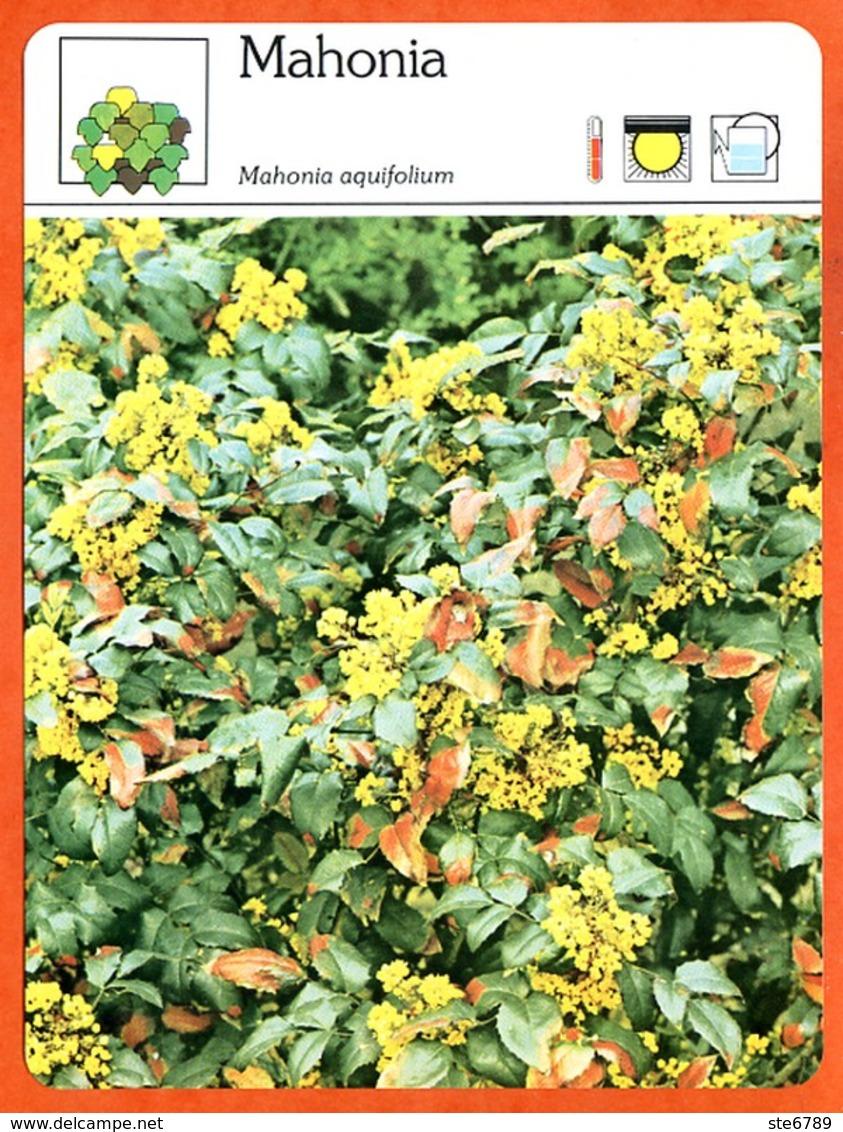 MAHONIA   Arbuste Fiche Illustrée Documentée  Arbustes - Fichas Didácticas