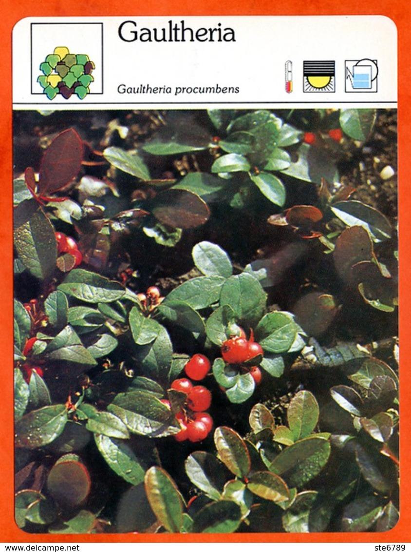 GAULTHERIA  Arbuste Fiche Illustrée Documentée  Arbustes - Fichas Didácticas