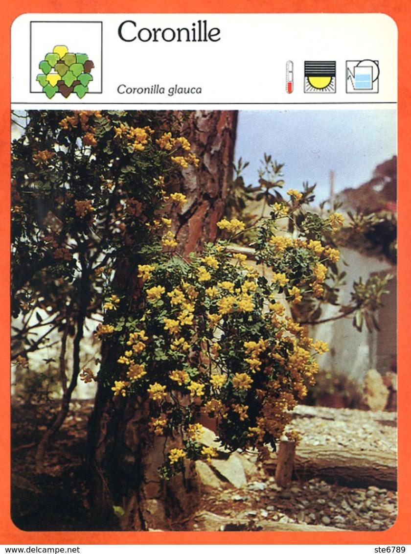 CORONILLE   Arbuste Fiche Illustrée Documentée  Arbustes - Fichas Didácticas