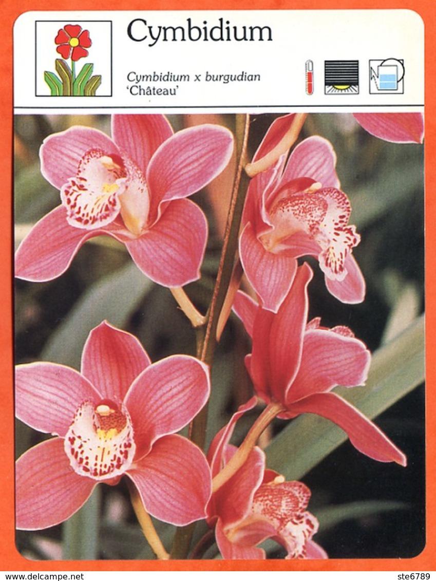 CYMBIDIUM 1 Fleurs Orchidées Fiche Illustrée Documentée Fleur  Orchidée - Fichas Didácticas