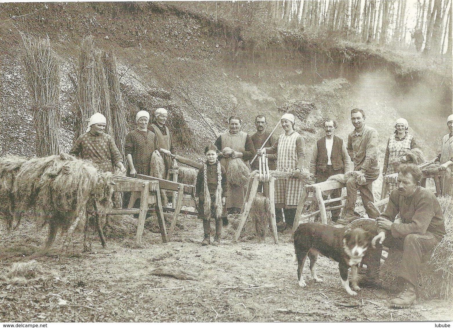 Gösgen - Bauern Beim Flachs Rätschen Um 1917  (Repro)        Ca. 2000 - SO Soleure