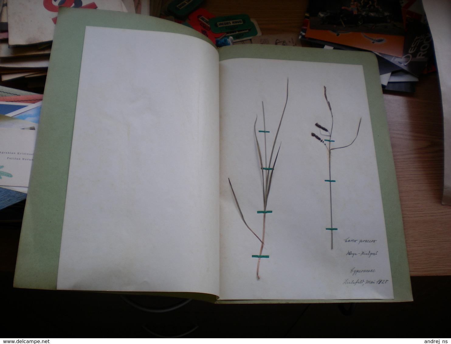 Old Herbarium Cyperaceae 1928 - B. Flower Plants & Flowers