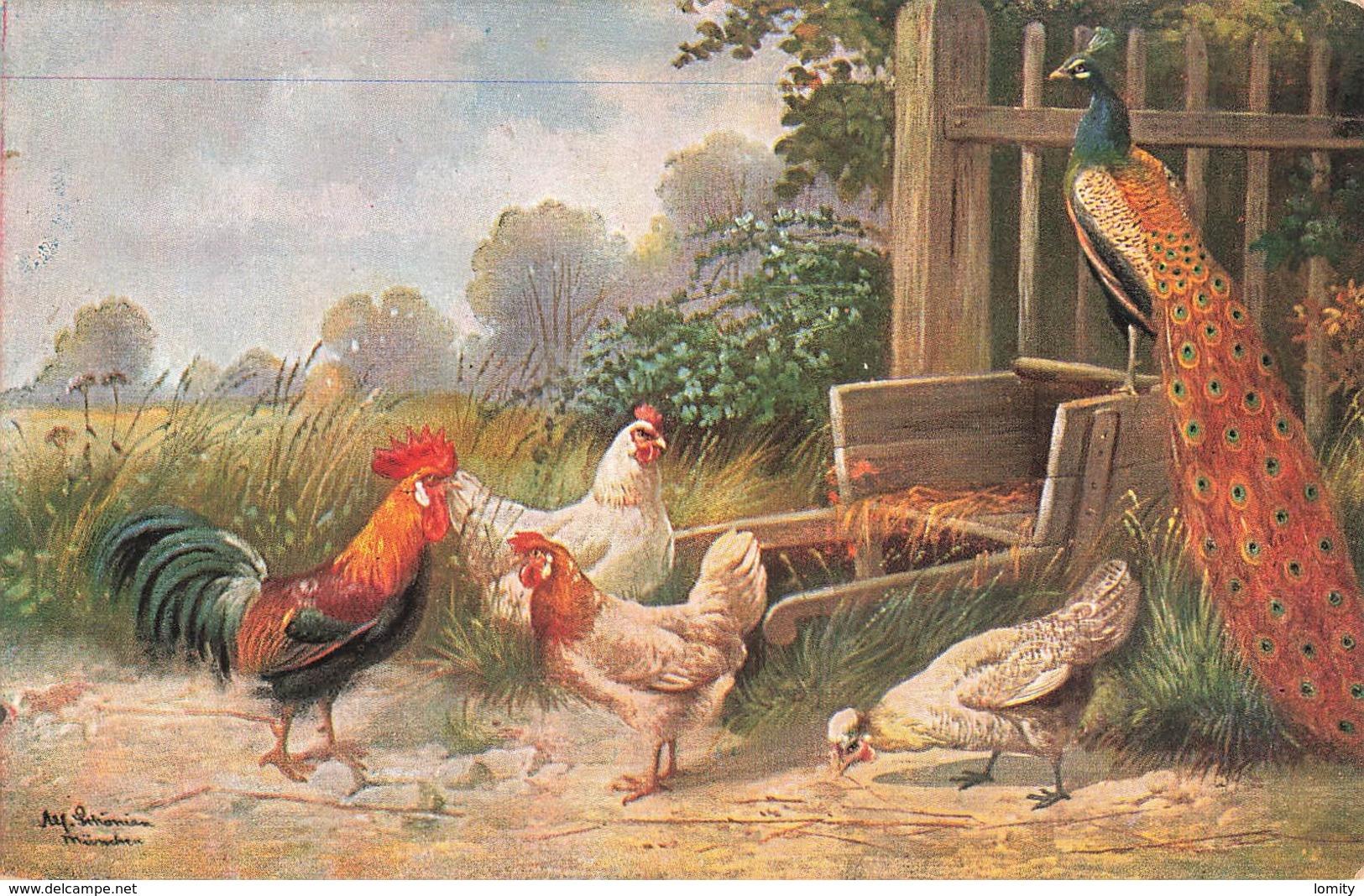 Animal Animaux Coq Poule Paon Oiseau Oiseaux Gallinacé Gallinacés Illustration - Birds