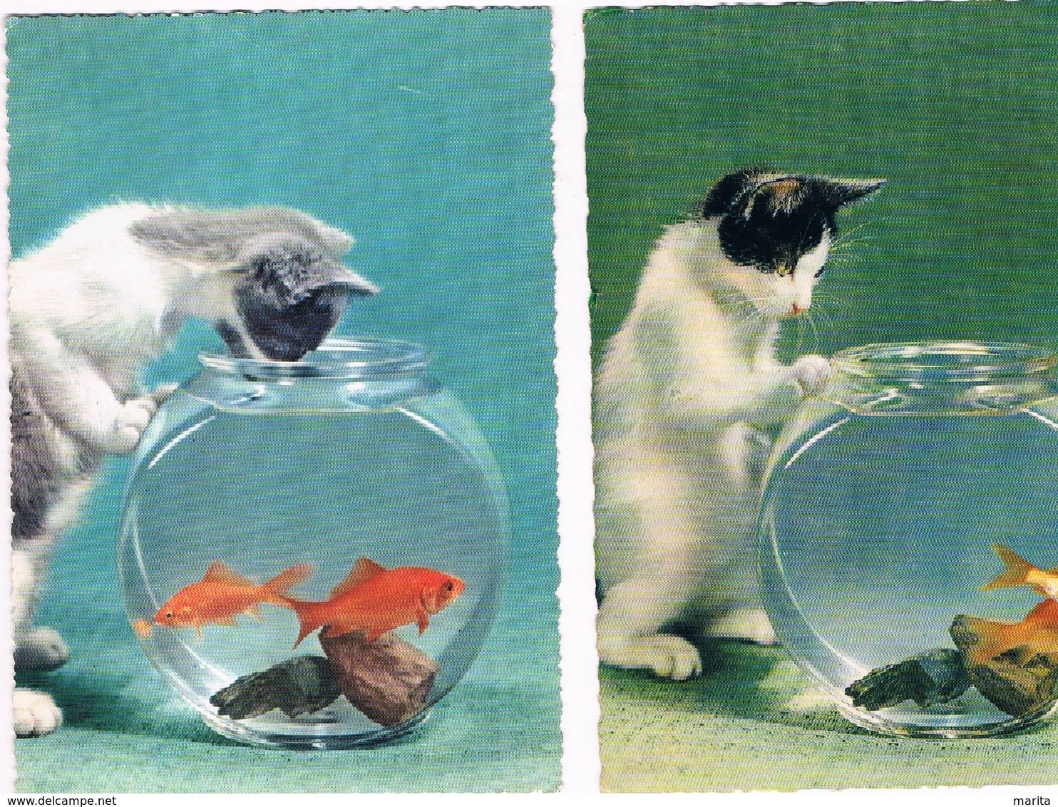 2 Cartes Chat Et Poisson -cat Fish -katze-  Poes Visbokaal - Chats