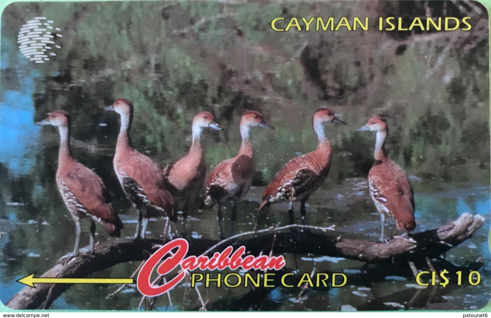 ILES CAYMAN  -  Phonecard  -  Cabble & Wirelees  -  Dendrocygna Arborea  -  CI $ 10 - Iles Cayman
