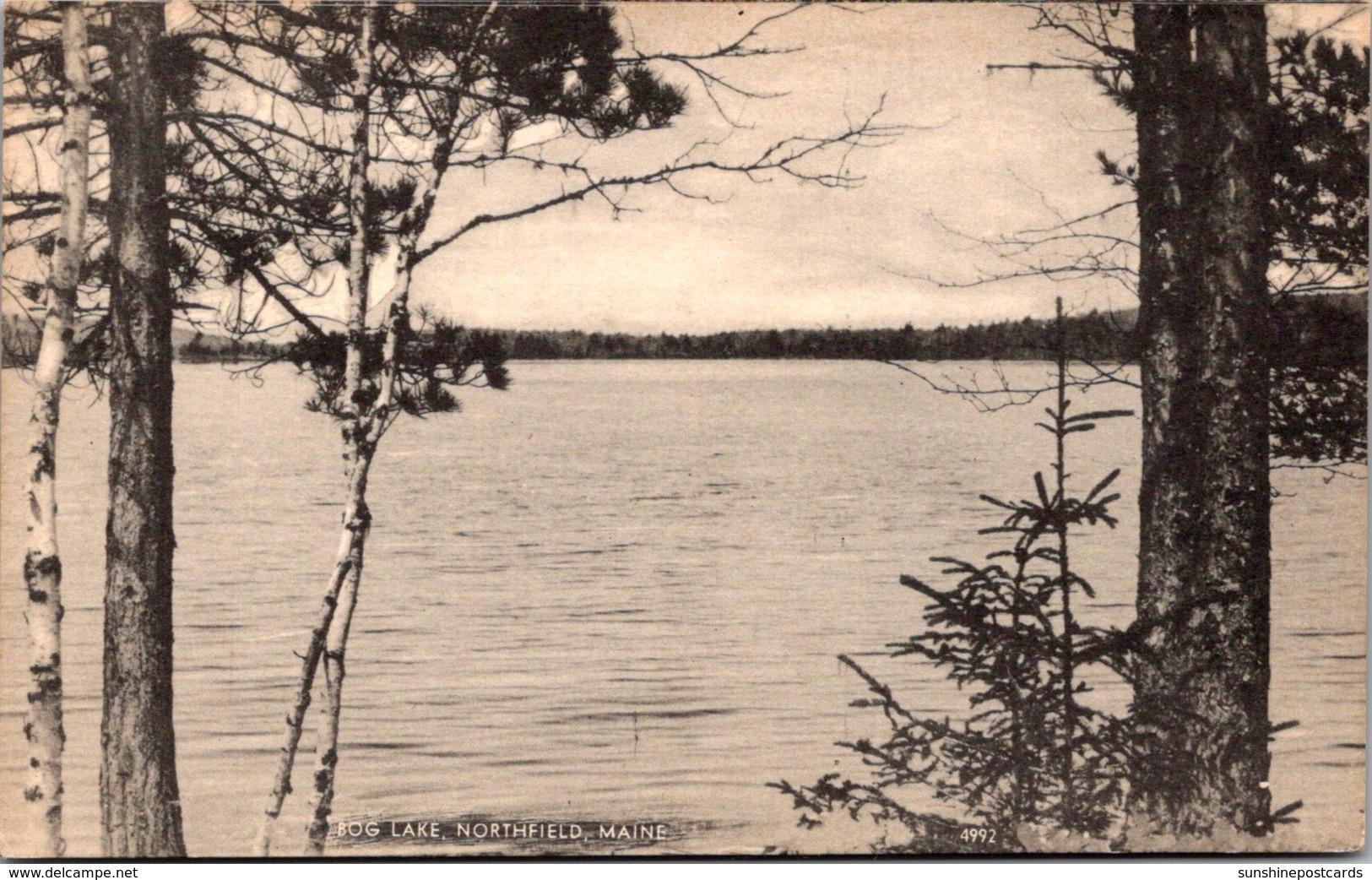 Maine Northfield View Of Bog Lake
