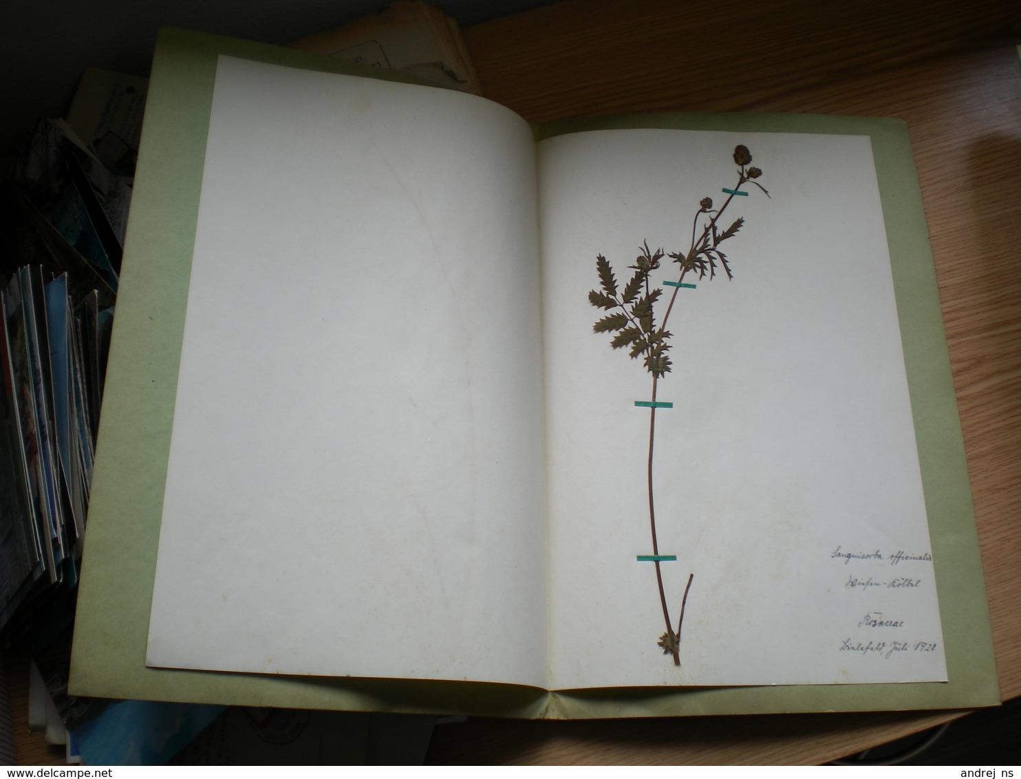 Old Herbarium Rosaceae 1928 - B. Flower Plants & Flowers