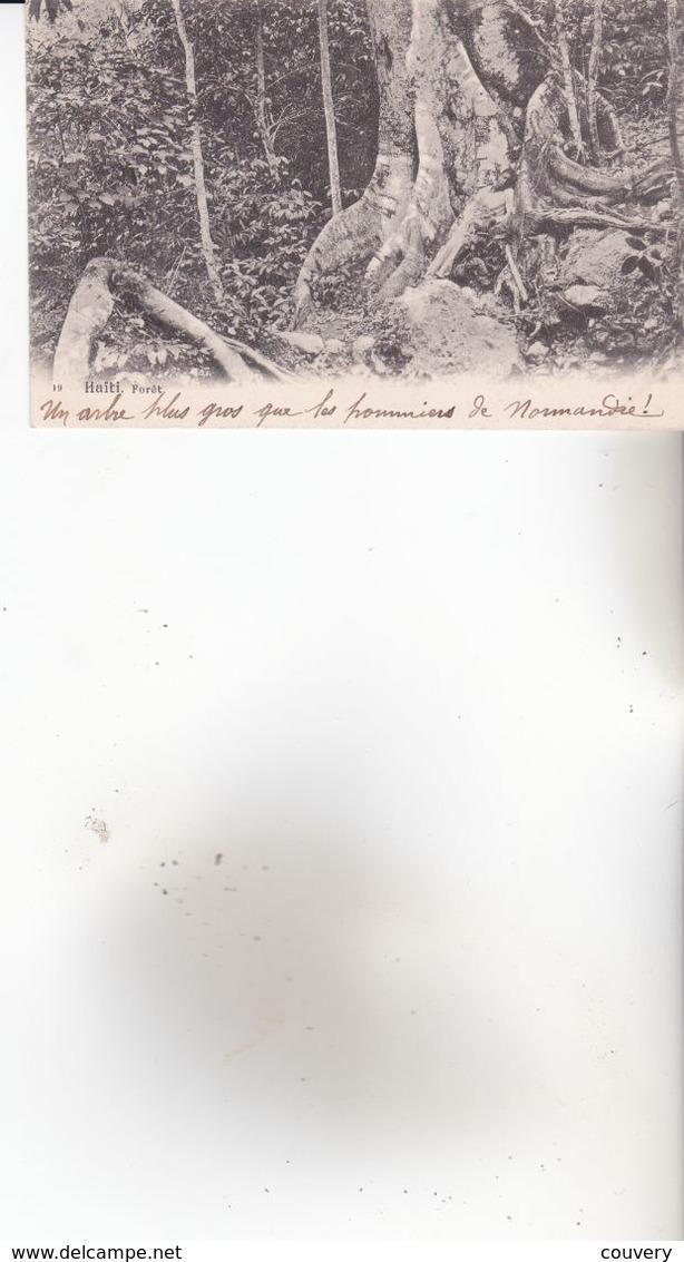CPA HAITI ,Arbre Géant. ( Non écrite Au Dos.) - France